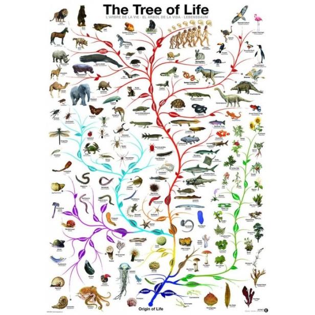 treee-of-life