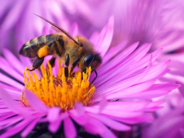abelhas-se-alimentando-4