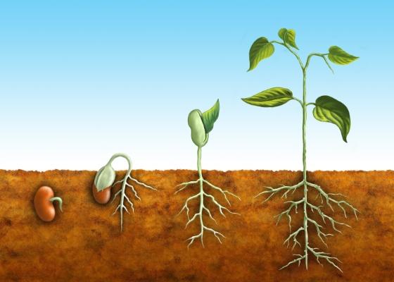 processo-da-semente