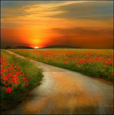 caminho-flores-por-do-sol