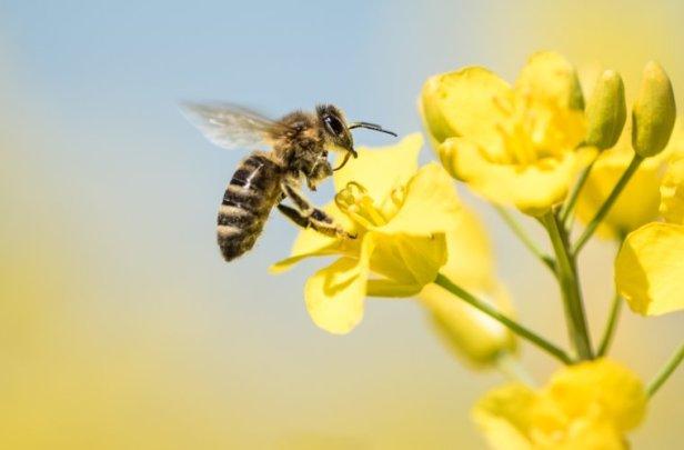 importância-das-abelhas-na-agricultura-759x500